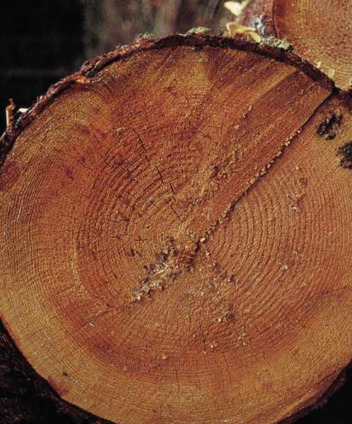 Maderas aguirre ficha tecnica de la especie de madera - Madera de abeto ...