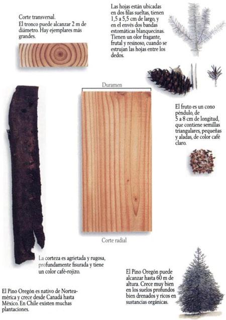 Ficha tecnica del abeto douglas - Maderas del pino ...